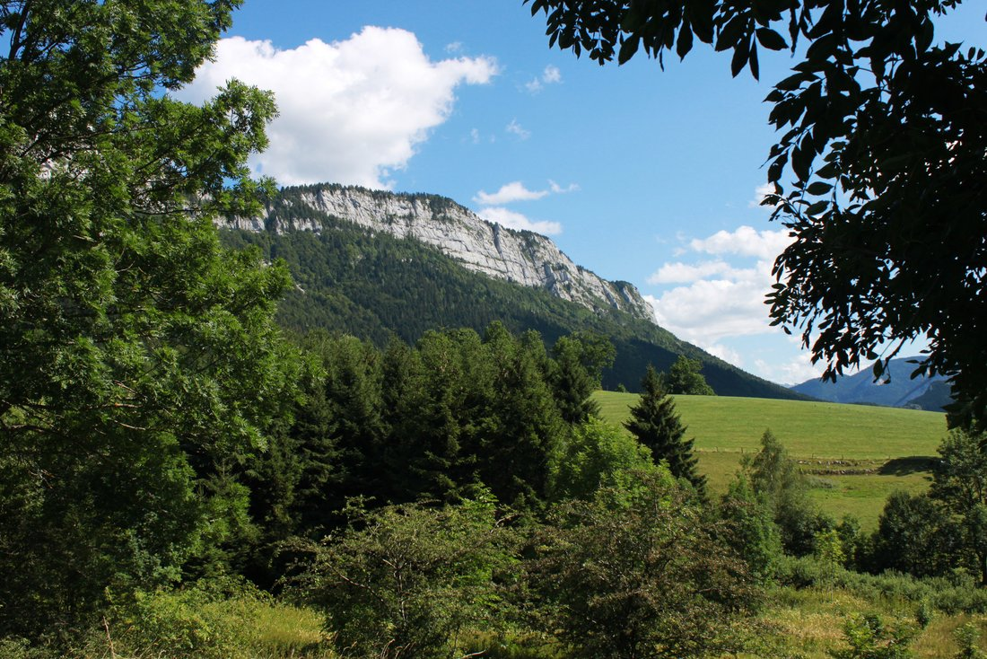mountain and meadow landscape