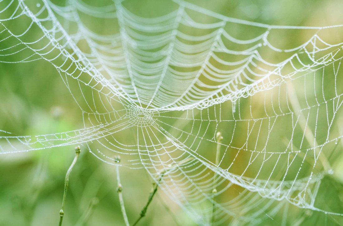 Close-up on a spider web in nature.
